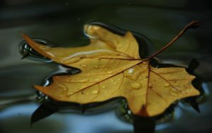 filepicker-EarKVLgYTmOqI9n2uX5l_leaf-floating-on-water-macro-1280x800-wallpaper-rjnfg